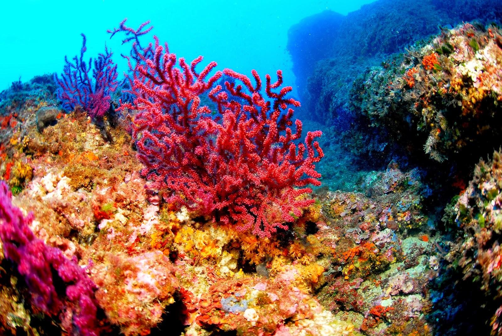 corales 1